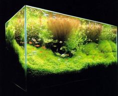 Como cultivar plantas de aquário. Um aquário é um elemento muito decorativo para o lar. Além de uma imensa variedade de peixes, também existem variadas plantas aquáticas que, além de embelezar, também ajudam na sobrevivência dos peixe...