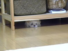 peek-a-boo I see you!!