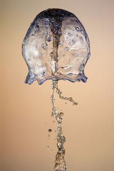 Jellyfish - Water Photograph my Markus Reugel 💧 Water Drop Photography, High Speed Photography, Underwater Photography, Macro Photography, Water Drawing, Water Art, Medusa, Beautiful Images, Wonderful Images