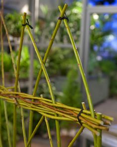 Living Willow fence - Martha Stewart