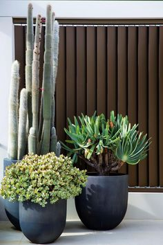 garden photography A collection of succulents in handmade charcoal planters line the terrace of this Japanese inspired garden on Sydneys North Shore. Backyard Pool Landscaping, Florida Landscaping, Landscaping Ideas, Garden Signs, Small Garden Design, Diy Garden Projects, Easy Garden, Succulents Garden, Indoor Plants