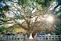 the perfect tree to get married under.