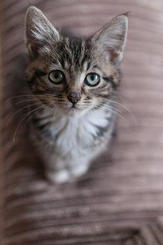 Kitten by Dave Hoe