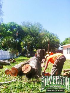 Tree Services Oldsmar FL   Tree Services Oldsmar FL  (727) 408-4894 Do you need assistance with Tree Services in Oldsmar ?  For the best Tree Services you can give Silverson Tree Services and Landscaping a telephone call today! We could provide you with affordable Tree Services prices. Google search for our name on the internet and you will discover our excellent Tree Services reviews.  We are the best tree service provider which addresses nearly all phases from small tree trimming tasks to…