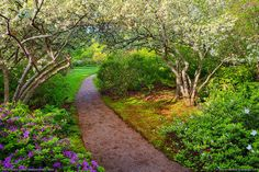 This view of the flowered Archway over the walking path in Asticou Azalea Garden was captured on the North side looking toward the South. Beautiful Landscapes, Beautiful Gardens, Flower Archway, Acadia Maine, Baxter State Park, Mount Desert Island, Beautiful Places To Travel, Amazing Places, Gardening Tips