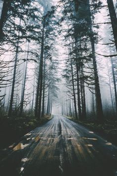 Story inspiration - open road, forest. Setting, screenwriting, filmmaking, writing.