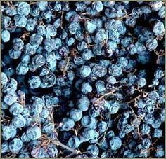 Amarone wine made from dried grapes