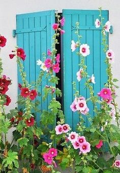 Love the blue as backdrop  Maybe shutters on my garden shed with hollyhocks & some other tall growing flowering plants between it & the bench