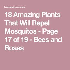 18 Amazing Plants That Will Repel Mosquitos - Page 17 of 19 - Bees and Roses