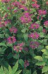 13 nectar-rich plants for hummingbirds.