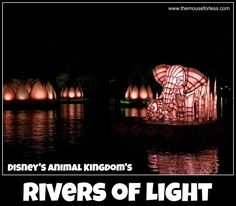 Rivers of Light is Animal Kingdom's first nighttime spectacular. Find viewing locations, tips, and fun facts about the performance.