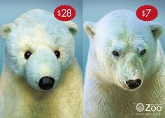 Great zoo adverts from around the world. (This one is from the Buenos Aires Zoo.) I want to pin half the images on this page. www.designyoutrust.com