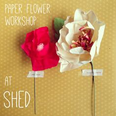 Courtney Cerruti | workshops #paper #flower #class #shed