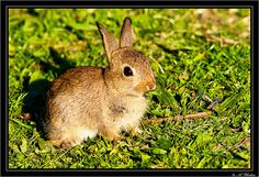 Rabbit by a3aanw, via Flickr