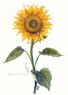 painting Sunflower 5x7 watercolor print by bleuherron on Etsy, $16.00