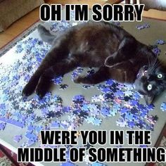 Oh, I'm sorry    Were you in the middle of something?    (Click to see more funny pictures)