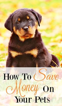 Tips to Save money on pets.