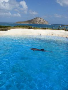 oahu...OMG, this is Sea Life Park, the Dolphin Pool, where I swam with the Dolphins!
