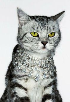 cat jewelry..