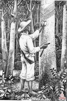 seringueiro-amazonia.jpg (600×904)