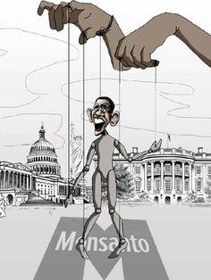 Obama promulga ley que protege a los productores de semillas transgénicas - Noticias Uruguay LARED21