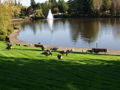 Murrayhill Park in Beaverton, Oregon (right up the street from where I live)