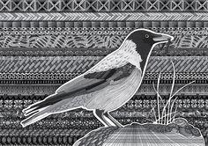 Kråke, zentangle, stavern, drawing, tegning, illlustrasjon, illustration