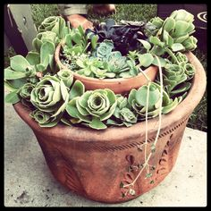 Happiness succulent garden