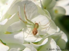 Spider on some flowers!