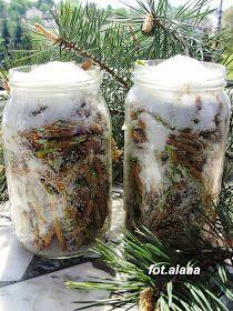 Ala piecze i gotuje: Syrop sosnowy Geraniums, Pillar Candles, Preserves, Herbalism, Mason Jars, Good Food, Health, Diet, Herbal Medicine