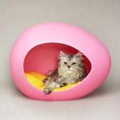 gato-caseta-peipod