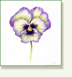 """Terrific Free Pansies drawing Thoughts Pansies will be the colorful flowers with """"faces."""" A cool-weather favorite, pansies are great fo Watercolor Cards, Watercolour Painting, Watercolor Flowers, Painting & Drawing, Watercolors, Art Floral, Botanical Art, Botanical Illustration, Fleur Pansy"""