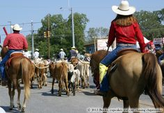Cattle Drive in Bandera, TX | Books Cupcakes and Cats Chasing Chipmunks