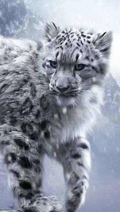White Snow Leopard Cub iPhone 5 Wallpaper