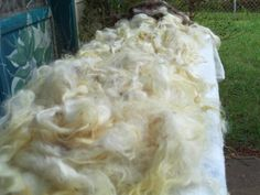 the star box: How-to Wash a Raw Fleece