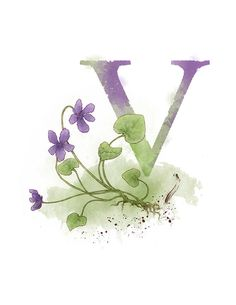 Letter V, Violet, Nature Alphabet Initial Nursery Home Decor 8.5 x 11