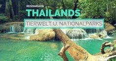 Ein kleiner Überblick über Thailands grandiosen Nationalparks und die fantastische Tierwelt. http://flashpacking4life.de/thailands-vielfaeltige-tierwelt-nationalparks-schlangen/ #thailand #reisen