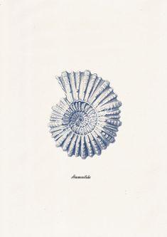 Sea shell in blue Nautilis 2 Ammonitida Sea von seasideprints