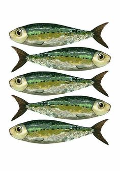 Items similar to print // Tightened like sardines // on Etsy Image Of Fish, Fish Template, Fish Drawings, Kunst Poster, Fish Patterns, Little Fish, Sea Art, Fish Design, Animal Coloring Pages
