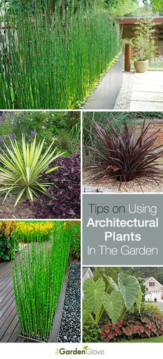 Using Architectural Plants in the Garden • Great info and Tips! Reference the part on Horsetail Reeds.