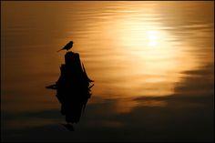 Golden morning hours - Jan Zajc
