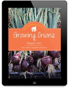 Tips for growing great onions in your vegetable garden, including watering, weeding, planting and choosing varieties.