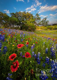 Texas Paradise Photograph by Inge Johnsson Beautiful Landscapes, Beautiful Gardens, Beautiful Flowers, Beautiful Places, Texas Bluebonnets, Photos Voyages, Felder, Texas Hill Country, Blue Bonnets