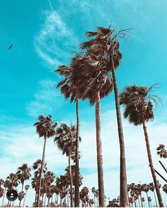 Beautiful days in San Diego #lajollalocals #sandiegoconnection #sdlocals - posted by Prime Home Partners  https://www.instagram.com/primehomepartners. See more post on La Jolla at http://LaJollaLocals.com