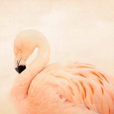 pink flamingo photography - pink nursery decor, animal photography, nature, minimalist, pink home decor, bird photography