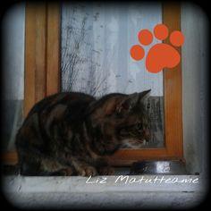 Con la piccola #EtaBeta il lunedì è un poco più dolce ♡   #buonaserata a tutti :-)      #Goodnight #Sleeptime #sleep #catsofinstagram #cats #instacat #cutecats #sweetcats #lovelovelove #lovecat   @animals_captures #animal_captures #cats #pets #animals #photooftheday #ilovemycat #nature #catoftheday #lovecats   #catsmylove #gatti #ioamoglianimali #MIAO :-)   @cats_of_instagram @nature_cuties @gattidiinstragram @royalcaninit @proplancat #noallabbandono