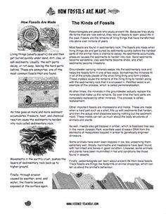 how fossils were formed worksheet hot resources 2 4 pinterest fossils and worksheets. Black Bedroom Furniture Sets. Home Design Ideas