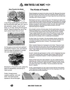 Printables Fossils Worksheet fossils worksheets for 4th grade student handout heres a page of information on how are