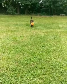 Dog Owners, Pretty Puppies, - Dog House Heating Pad Outdoor, Luxury Dog Boarding Near Me. Funny Animal Videos, Cute Funny Animals, Cute Baby Animals, Animal Memes, Funny Dogs, Animals And Pets, Dog Videos, Cute Puppies, Cute Dogs