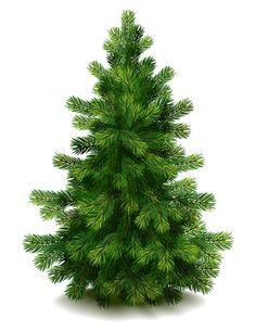 Christmas green fir tree vector material 05